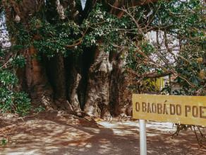 Curiosidades sobre o Baobá do Poeta