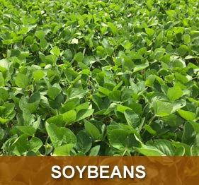 prod-soybean.jpg