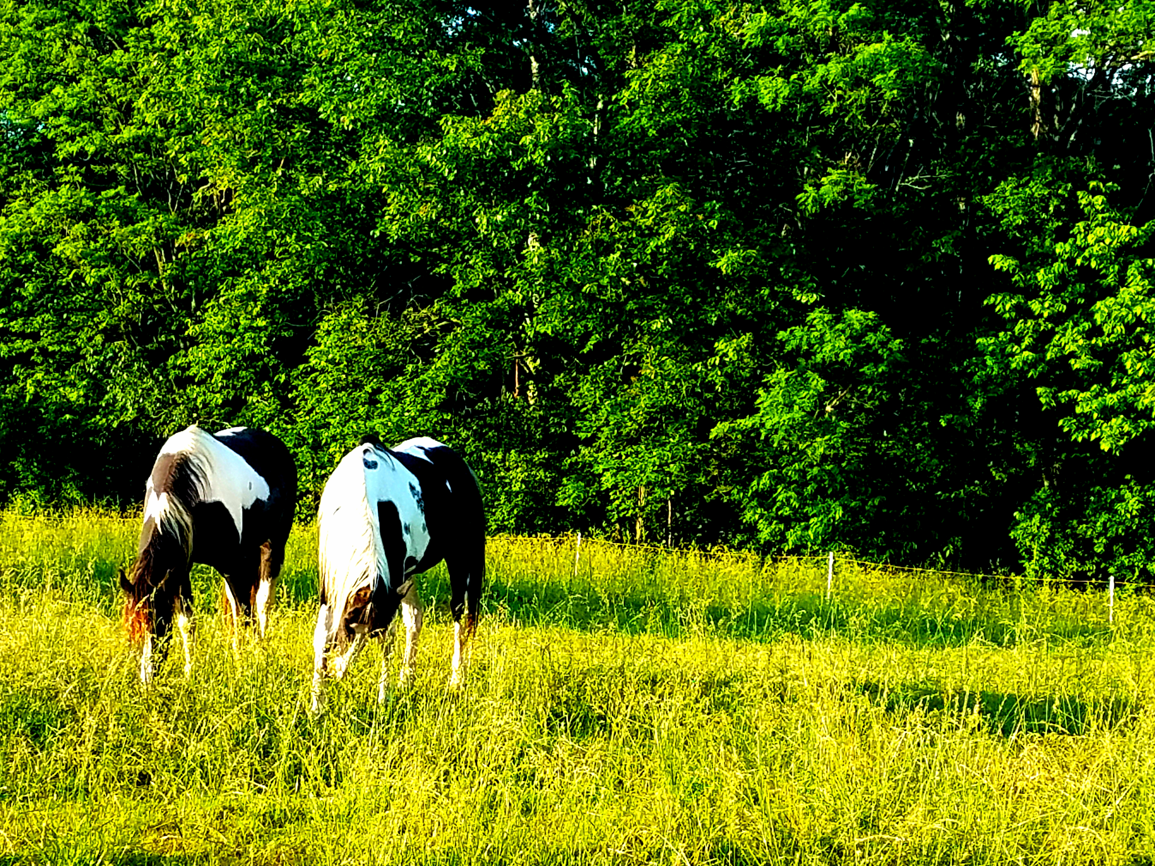 horsesspring
