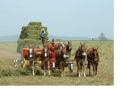 Amish-2.jpg