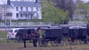 How has the Covid-19 quarantine affected the Amish?