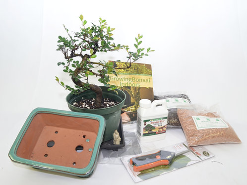 Starter Kit - Large