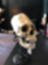 Zane Elongated Skull.jpg