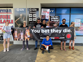 Boycott Harvey Norman and Say NO to Animal Abuse Action