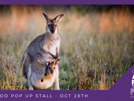 """STOP the slaughter! End the """"harvesting"""" of our native Kangaroos"""