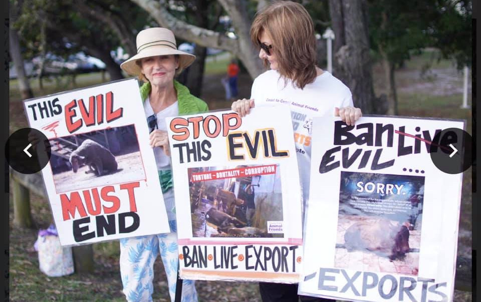 Ban Live Export Campaign 12th September
