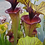 Thumbnail: Sarracenia Flava Ornata (F88 MK), solid red throat