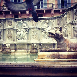 Siena wolf and pigeon