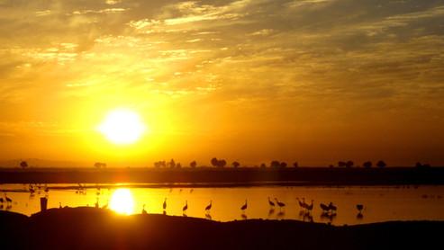SF-Bay Delta at Dawn