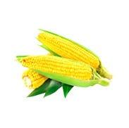 Corn_1_edited.jpg