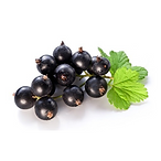 Black_Currant.png
