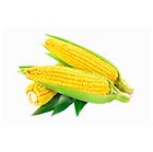 Corn_1.png