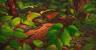 Forest Floor IV