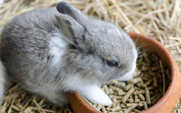 Feed-Pellets-for-Raising-Rabbits.jpg