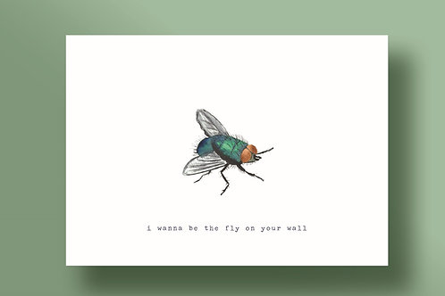 I wanna be the fly on your wall