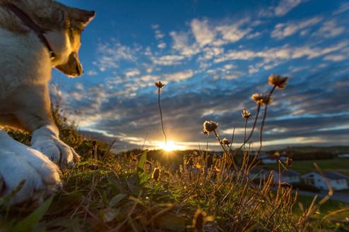 DOG IN SUNRISE