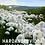Thumbnail: HARDANGERVIDDA NASJONALPARK IV
