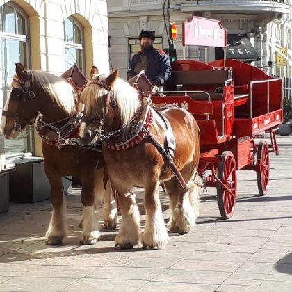 Klo 14.00 Sinebrychoffin hevoset ovat mukana tapahtumassa