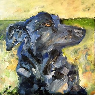Dogs of Dorset-Huxley