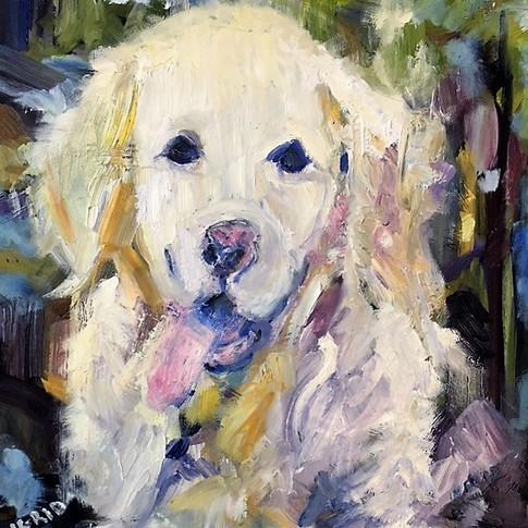 Dogs of Dorset-Hamish