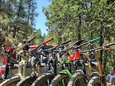 Mountain Bikes and trees