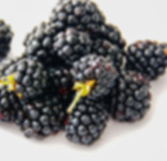 blackberry_edited.jpg