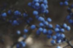 berry earthy.jpg