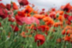 flowery.jpg