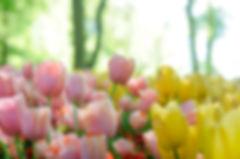 sweetflowers.jpg