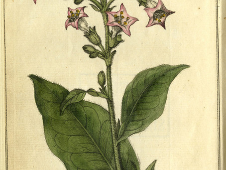 Tobacco in America - Establishing our Nation's Roots: The Colonies and Britain's Perspective