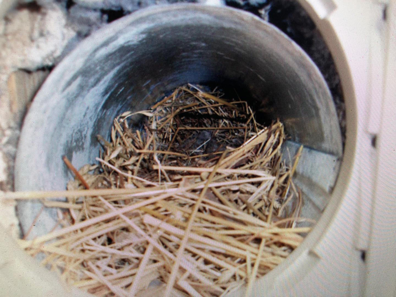 Bird Nests!