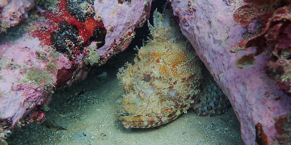 Saturday - 12.00 Guided Shore Dive