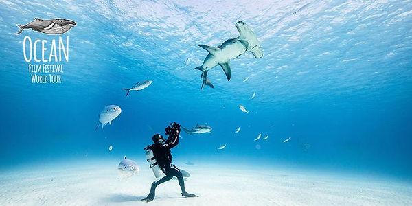 Ocean Film Festival.jpg