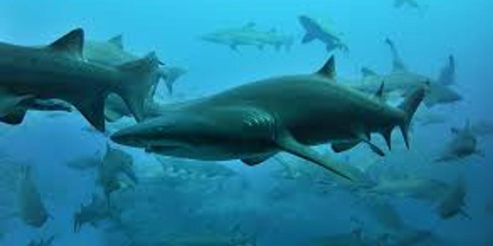 Teen Dive Team School Holiday Event Nurse Sharks & Soft Coral