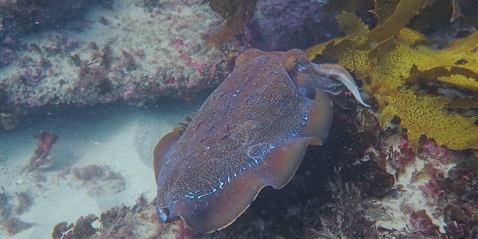 Sunday - 9 am Guided Shore Dive