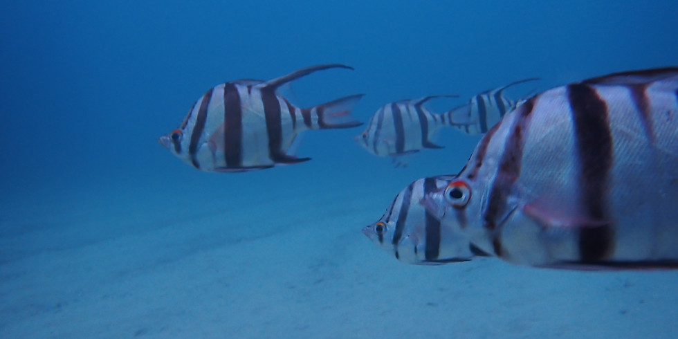 Sunday - 1.30 pm Guided Shore Dive
