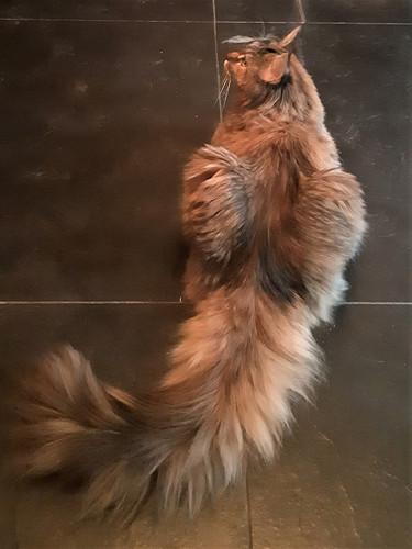 Chloe 1 jaar