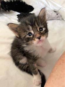 Dakota 3,5 weken
