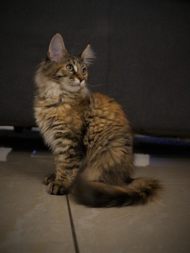 Chloe 14 weken