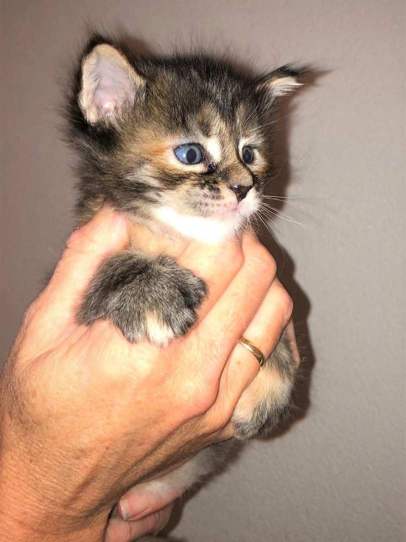 Chloe 3 weken