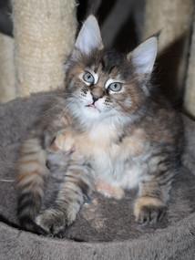 Chloe 8 weken