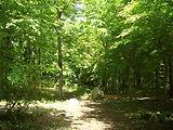 森の散策路.jpg