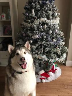 Lex christmas (Copy)
