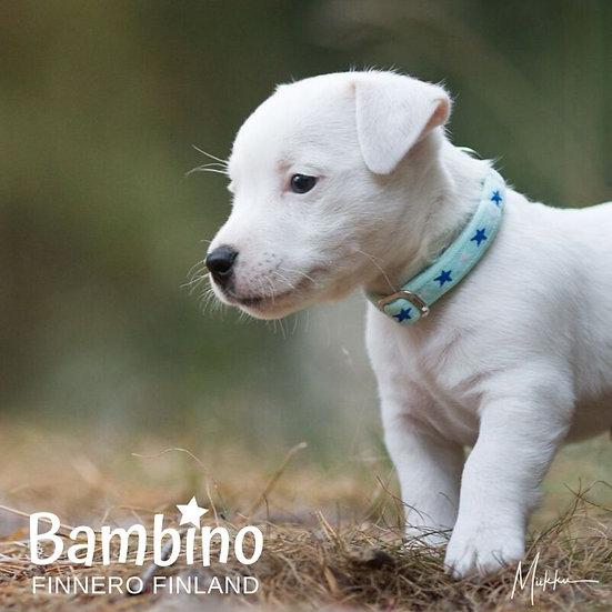FinNero Bambino Collar - Sky Blue