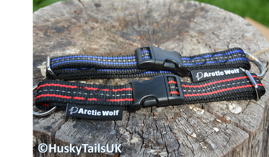 Arctic Wolf Click Collar - Medium