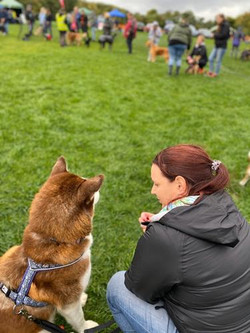 Lola back dog show (Copy)