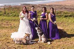 Wedding dogs (Copy)