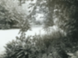 DSCF7168.jpg