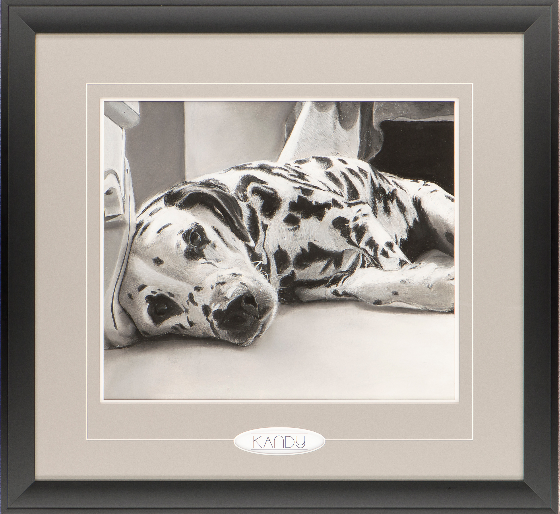 Kandy the Dalmation