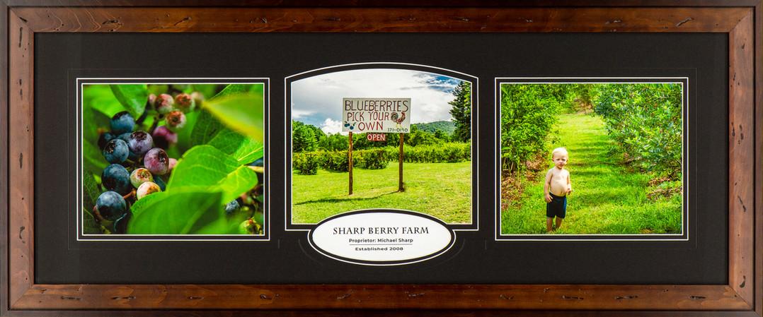 Blueberry Farm.jpg